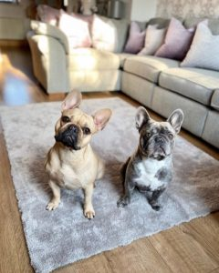 two dogs sat on rug