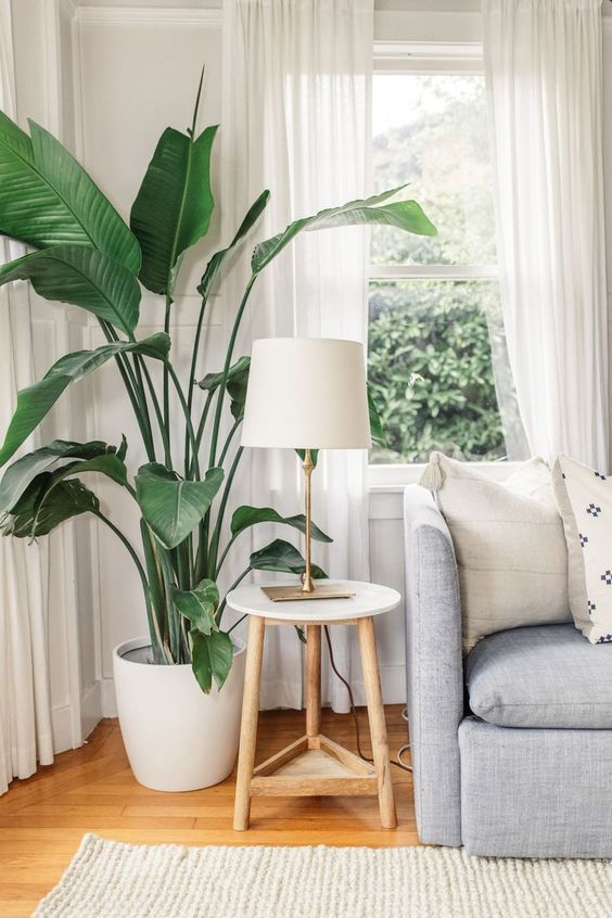 Living room with large houseplant beside the sofa, also including a comfortable rug